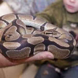 Reptile_Show_MontanaFamilyMarket