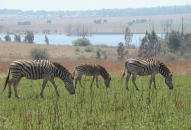 Game Reserve Pretoria